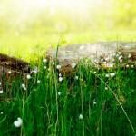 meadow_flowers-wallpaper-1920x1080